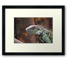 Beautiful peaceful Iguana Lizard sitting on a tree. Framed Print