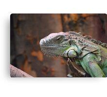 Beautiful peaceful Iguana Lizard sitting on a tree. Canvas Print
