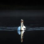 Just Another Swan Shot by Jim Wilson
