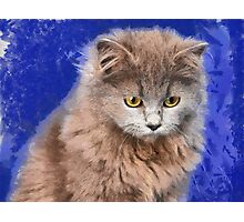 sad cat Photographic Print