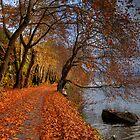 Leaves like snow on road.... by Tania Koleska