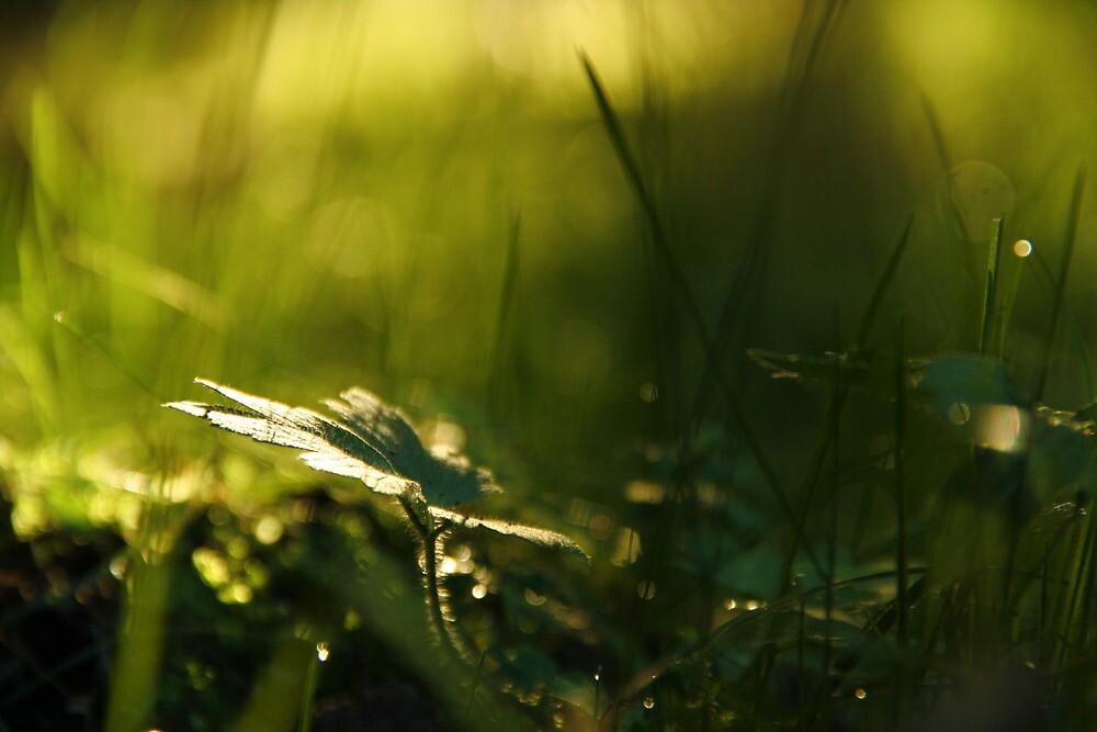 Green Beauty by paulili14