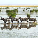 Everyone&#x27;s Out of Step Except My Little Zebra by Carole-Anne