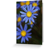 Cool Blue .... Greeting Card