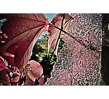 Shattered Beauty. Photographic Print