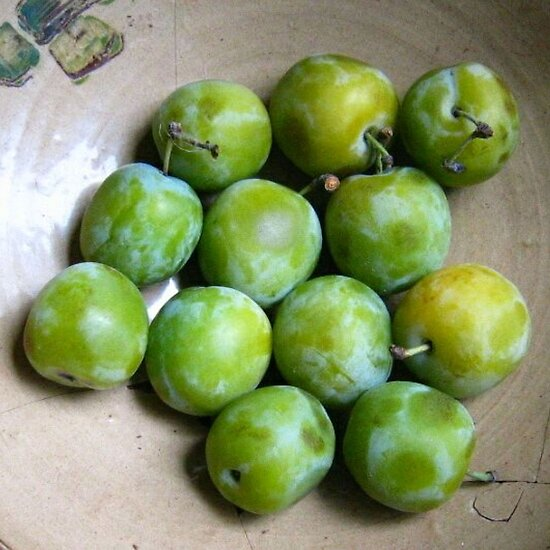Greengages Displayed In A Ceramic Bowl by taiche