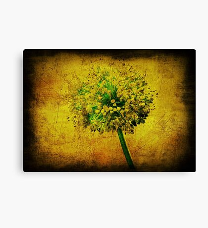 Flower. Canvas Print