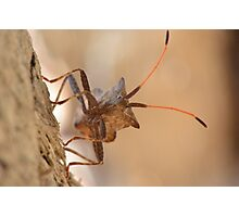 Creepy Insect Photography Wild Photographic Print