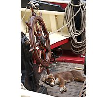 Sleeping dog onboard Classic boat, Brest 2008 Maritime Festival, Brittany, France Photographic Print