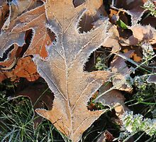 Frosty leaves by Nicole Gushue