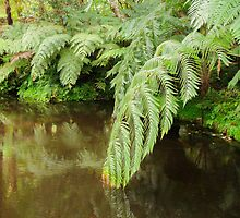 Ferns and Water by Dimuthu  Sudasinghe