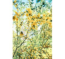 wattle wattle Photographic Print