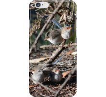 Union Meeting Blue Wrens iPhone Case/Skin
