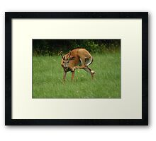 Deer Itch Framed Print