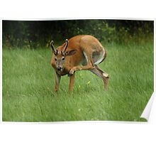 Deer Itch Poster