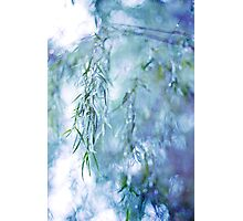 Silver Branches Photographic Print