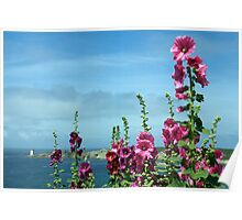 Beautiful pink flowers by the river estuary, Le Conquet, Brittany, France Poster