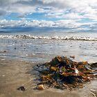 Storm-washed Beaches - Lyme Regis by Susie Peek