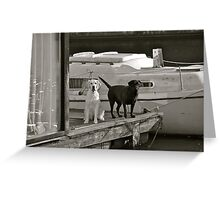 Dogs on the Dock Greeting Card
