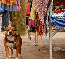 Market Staffie by Becky Hagan