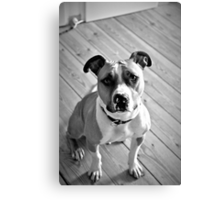 Please, Can I Have a Treat? Canvas Print