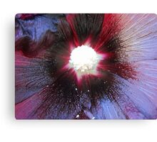 Plum Flower Canvas Print