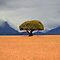 'n Eensame boom / A lonely tree