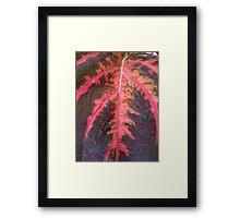 Don't Leaf Me Framed Print