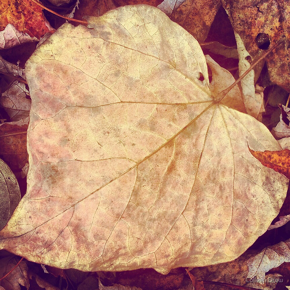 Veins of a Leaf by Colleen Drew