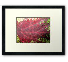 Leaf Me Be Framed Print