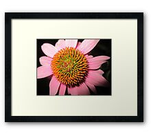 The Koosh Ball Framed Print