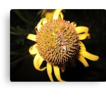 Ball of Beauty Canvas Print