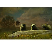 The Bear-a-Tones Photographic Print
