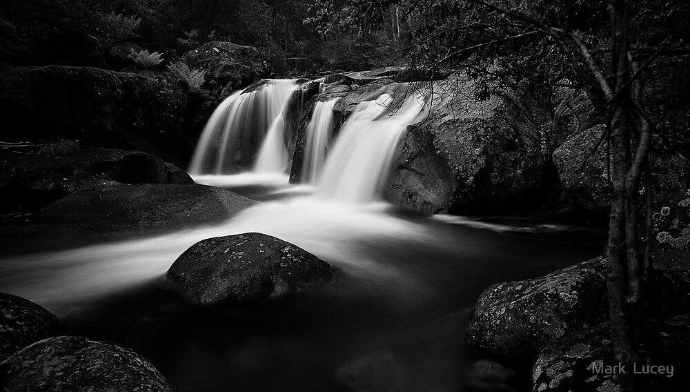 Purity by Mark  Lucey