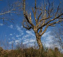March Riverbank, East Tennessee by adpeters