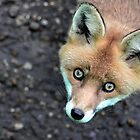Look into those eyes by Helen J Cherry