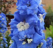 Blue Glory by podspics