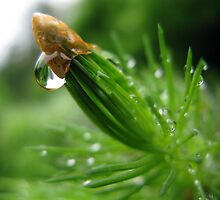 Pine & Water by Cow41087