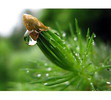 Pine & Water Photographic Print