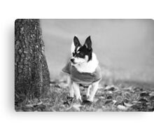 Winter Coat Weather~ Canvas Print
