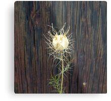 Lacy Seed Pod Metal Print
