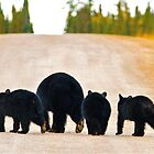 The Black Bear Family  by Chris  Gale