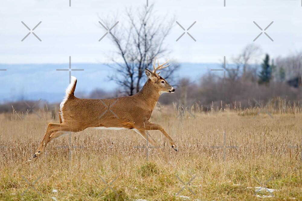 Buck on the Run 1 by Jim Cumming