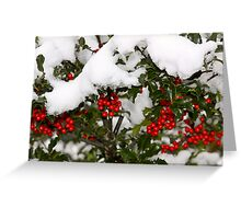 Holly and Snow Greeting Card