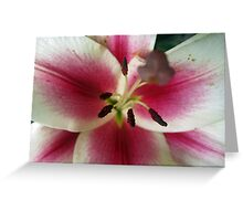 Petals of Watermelon Greeting Card