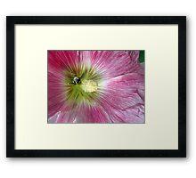 Bee Loving Framed Print
