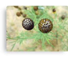 Spiky Balls Canvas Print