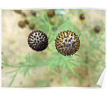 Spiky Balls Poster
