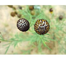 Spiky Balls Photographic Print