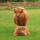Mother & Calf by AnnDixon